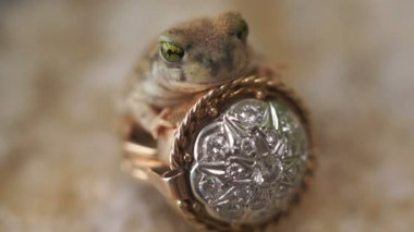 Frog Prince Ring Fairytale Fantasy — Stock Video