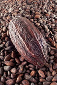 Cocoa bean on a cocoa beans background — Stock Photo