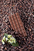 Milk chocolate on cocoa beans — Stock Photo
