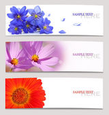 Background of spring flowers — Stock Photo