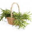 rosemary bunch — Stock Photo