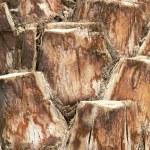 Old wood texture — Stock Photo #6380884