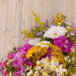 Wild Summer Flowers — Stock Photo #13121319