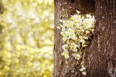 Kytice camomiles — Stock fotografie