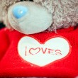 Teddy bear love you inscription on it. — Stock Photo #19491349