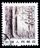 Stamp printed in China shows immense forest in the Northeast — Stock fotografie