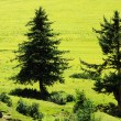 Stock Photo: Trees on grassland