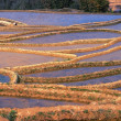 Terraced Fields — Stock Photo