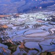 Terraced Fields — Stock Photo #23454264