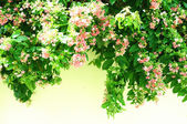 Fresh flowers background. Sunshine. Spring background — Stock Photo