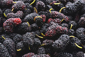 Closeup of many mulberry fruits — Stock Photo