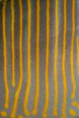 Sailfin Tang Skin Pattern — Stock Photo
