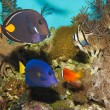 Reef Fishes in Aquarium — Stock fotografie