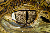 Cuvier's Dwarf Caiman Eye — Stock Photo