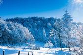 Abeto cubierto de nieve contra la luz — Foto de Stock