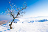 Tree in winter landscape — Stock Photo