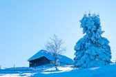 Fir Covered With Snow Against Light — Stock Photo