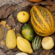 Ornamental Pumpkins — Stock Photo