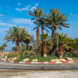 Palm trees near road in Israel — Stock Photo