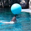 Performing Dolphin with Blue Ball — Stock Photo #37872361