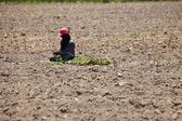 Farmer Preparing Young Cassava Plant — Stock Photo