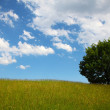 Stock Photo: Field, tree and blue sky