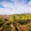 Tuscan countryside landscape — Stock Photo