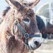 Stock Photo: Donkey on farm