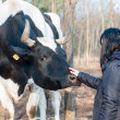 Girl caresses bull on the farm — Photo