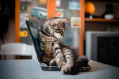 Cat lying on the notebook — Stock Photo