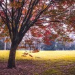 Autumn park landscape  — Stock Photo