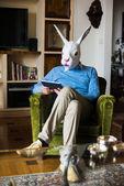 Elegant business multitasking rabbit mask man at home — Stock Photo