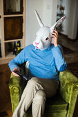 Elegant business multitasking rabbit mask man at home — Stock Photo