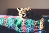 Gatto sul letto a casa — Foto Stock