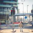 Stock Photo: Blurred city tilt shift
