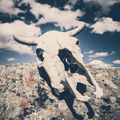 Bull Scull — Stock Photo