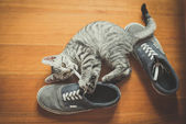 Puppy cat playing with shoes — Stock Photo