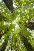 Vegetation — Stock Photo