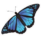 Motýl — Stock vektor