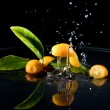 Citrus fruits in water — Stock Photo #37977783