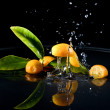 Stock Photo: Citrus fruits in water