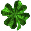 Shamrock burnt parchment — Stock Photo