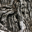 Bark texture - Stock Photo
