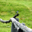 Stock Photo: Bird on a fence