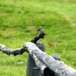 Bird on fence — Stock Photo #17856249