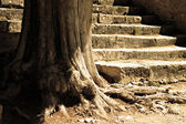 Tree and flight of steps — Stock Photo
