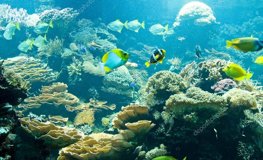 Peces tropicales en su h bitat fotos de stock - Peces tropicales fotos ...