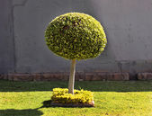 Ağaç topu şekil sanat — Stok fotoğraf