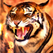 Royalty-Free Stock Photo: Angry Face Tiger Portrait Painting