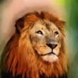 Royal King Lion Portrait Painting — Stock Photo